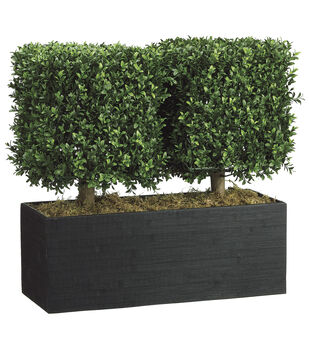 Boxwood Topiary in Rectangular Bamboo Container 24''-Green