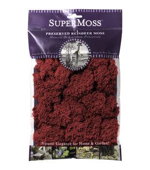 Fuschia  Reindeer Moss 2oz