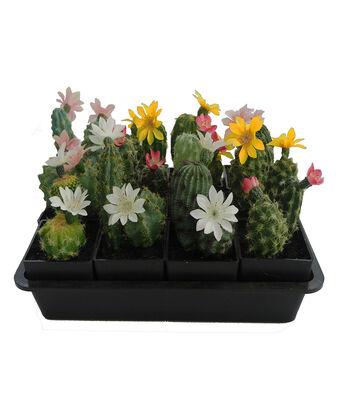 Fresh Picked Spring 6'' Nursery Arrangement with Cacti