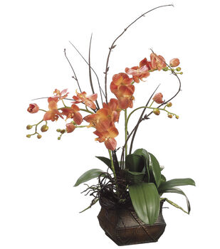 Bloom Room Luxe 33'' Phalaenopsis Orchid Twig In Container-Orange