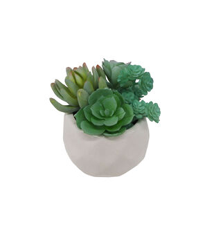 Fresh Picked Spring 5.75'' Rhombus Planter with Succulent Arrangement