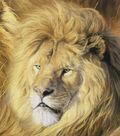 Novelty Cotton Fabric 44\u0022-Among The Lions