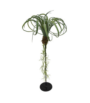 Fresh Picked Spring Desert Aura 18'' Air Plant Table Decor