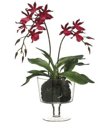 Bloom Room Luxe 26'' Zygopetalum Orchid Plant In Glass Vase-Red