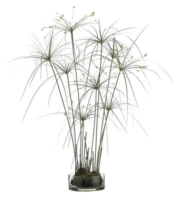 Bloom Room Luxe 38'' Papyrus Grass In Glass Vase-Green