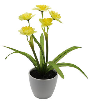 Fresh Picked Spring 10'' Narcissus in Pot-Yellow