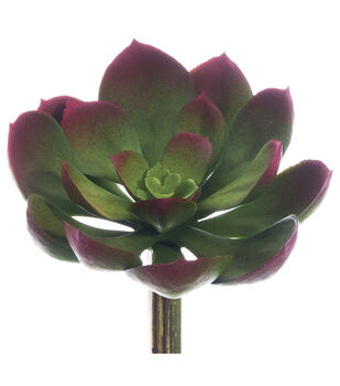 Bloom Room 5'' Soft Echeveria Pick-Green & Pink