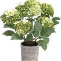 Hydrangea Plant in Clay Pot 32\u0027\u0027