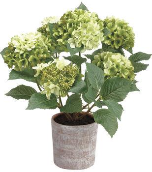 Hydrangea Plant in Clay Pot 32''