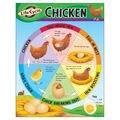 Life Cycle of a Chicken Learning Chart 17\u0022x22\u0022 6pk