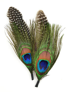 """Natural Feather Pick with nylon loop 5.5"""" (14 cm) Peacock/Guinea, 2 pieces"""