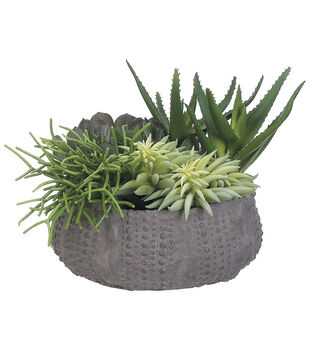 Succulents in Clay Pot 8''-Green