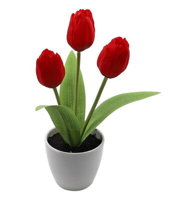 Fresh Picked Spring 10'' Tulips in Pot-Red