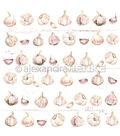Alexandra Renke Cooking Paper 12\u0022X12\u0022-Garlic