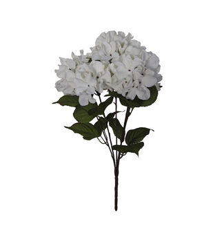 Blooming Autumn Hydrangea Bush-Dark Cream