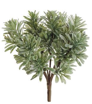 """7"""" Jade Plant Light Green"""