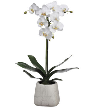Phalaenopsis Orchid Plant in Marble Look Pot 30''