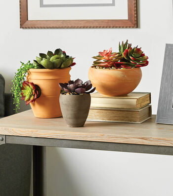 How To Make Succulent Plants