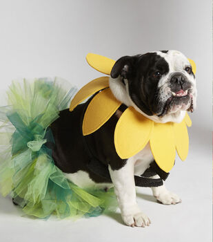 How To Make A Flower Costume for Dog
