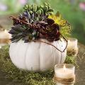 Ceramic Pumpkin & Succulent Arrangement
