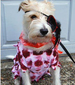 How To Make A Dog's Pirate Halloween Costume