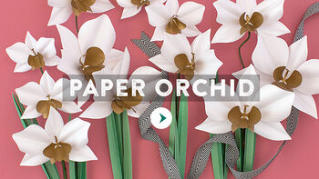 Lia Griffith Paper Cymbidium Orchid Video