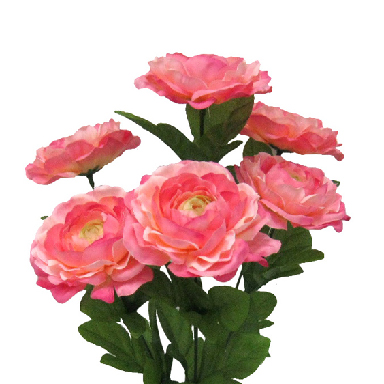 Shop by Flower, Ranunculus.