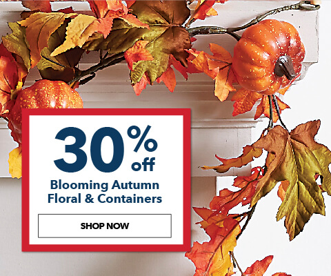30% off Blooming Autumn Floral and Containers. Shop Now.