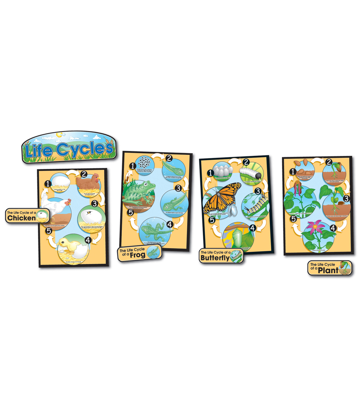 Life Cycles Bulletin Board Set (Butterfly, Chick, Frog, Plant), 2 Sets