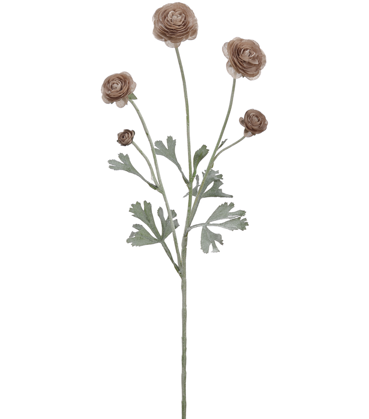 Bloom Room 28\u0027\u0027 Ranunculus Spray-Brown