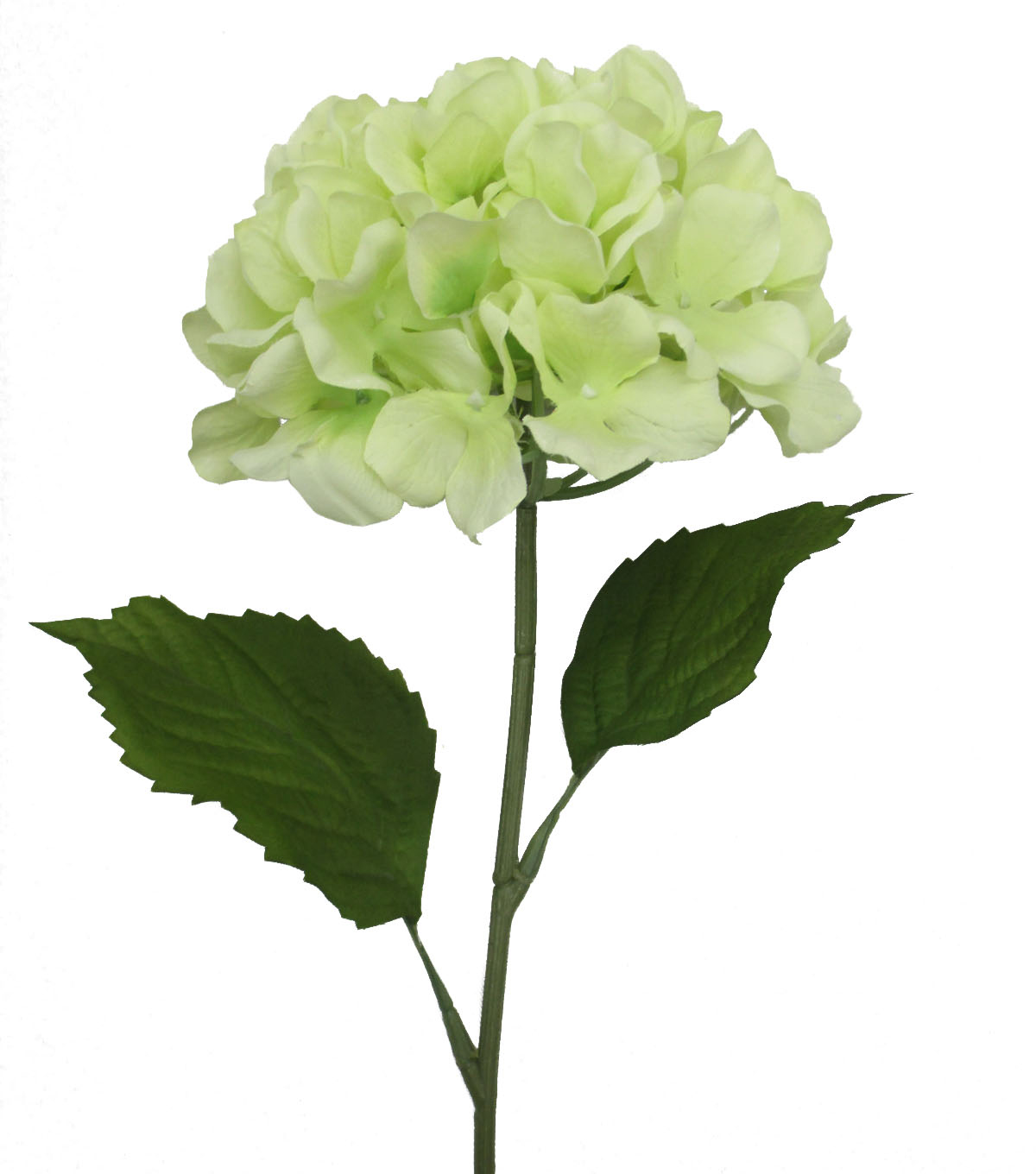 Fresh Picked Spring 26\u0027\u0027 Hydrangea Stem-Green