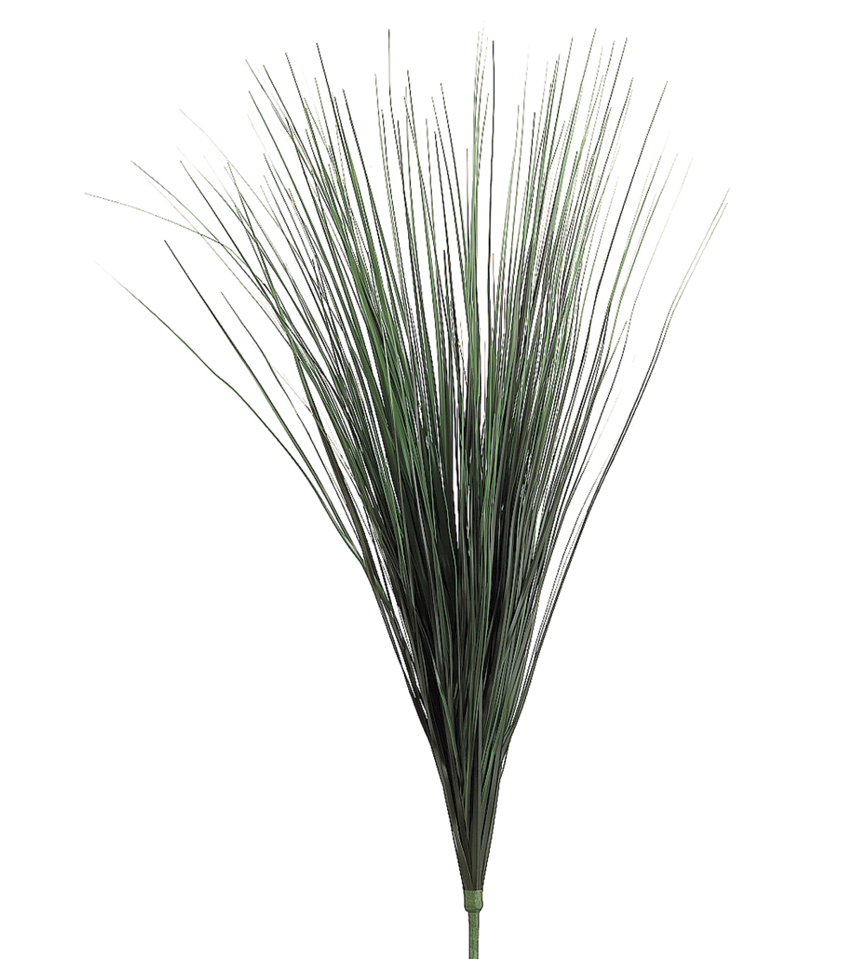 Onion Grass Bush