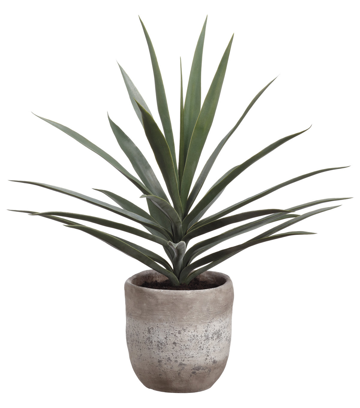 Yucca Plant in Cement Planter 31\u0027\u0027-Green