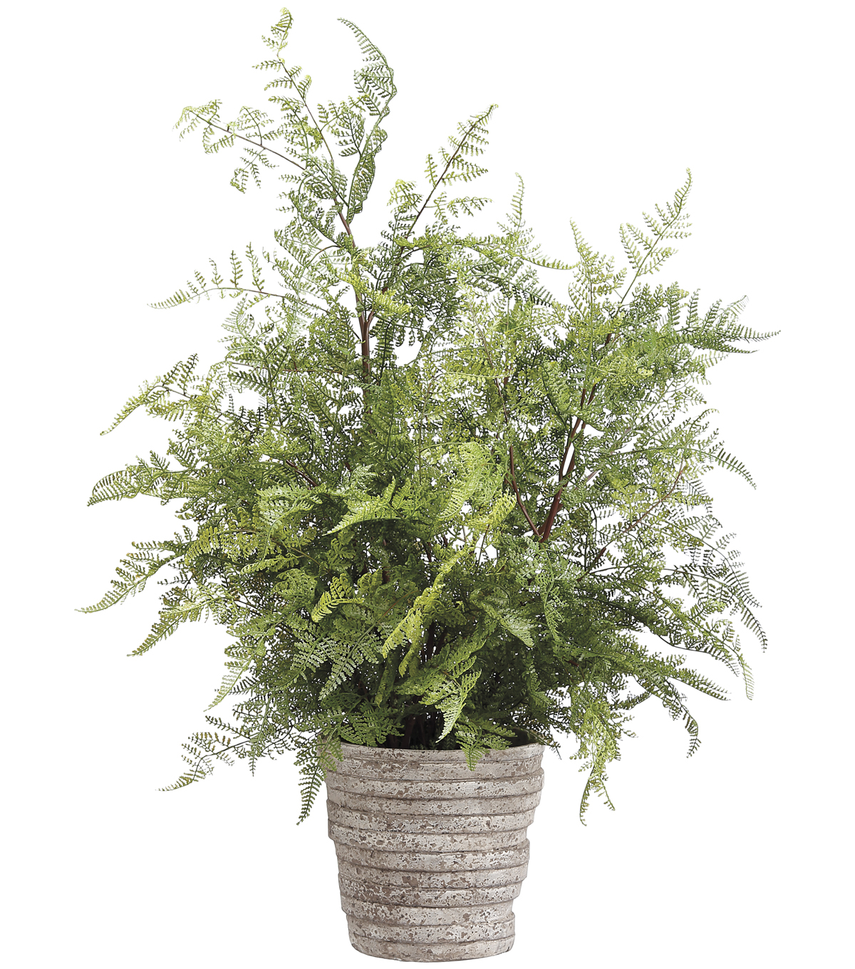 Lace Fern in Ceramic Pot 31\u0027\u0027-Green