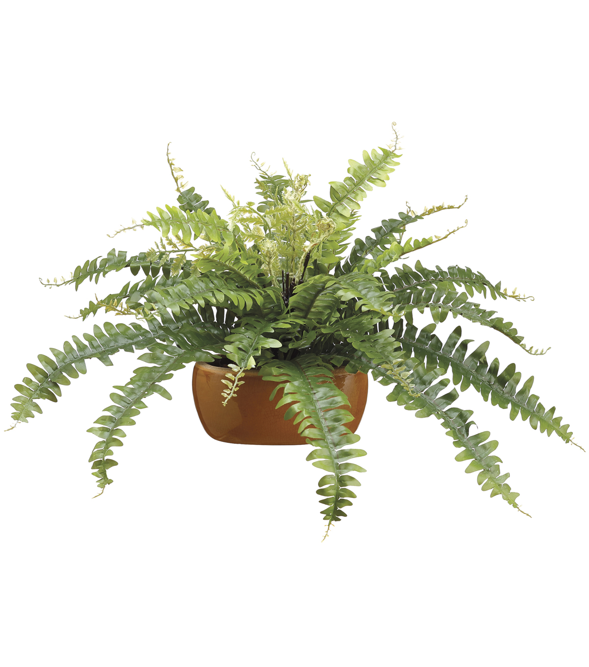 Boston Fern in Ceramic Pot 14\u0027\u0027-Green