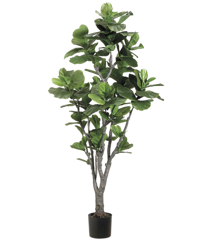 Fiddle Leaf Fig Tree In Plastic Pot 6 Green Joann