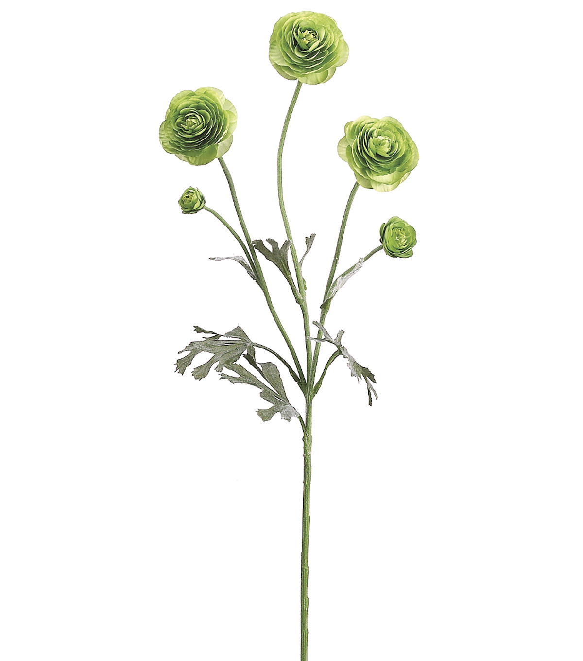 Bloom Room 29\u0022 Ranunculus Spray-Green