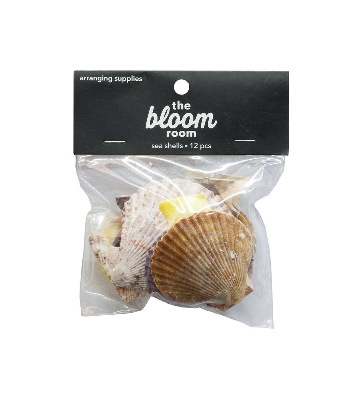 Bloom Room 12 pk Sea Shells-Multicolor