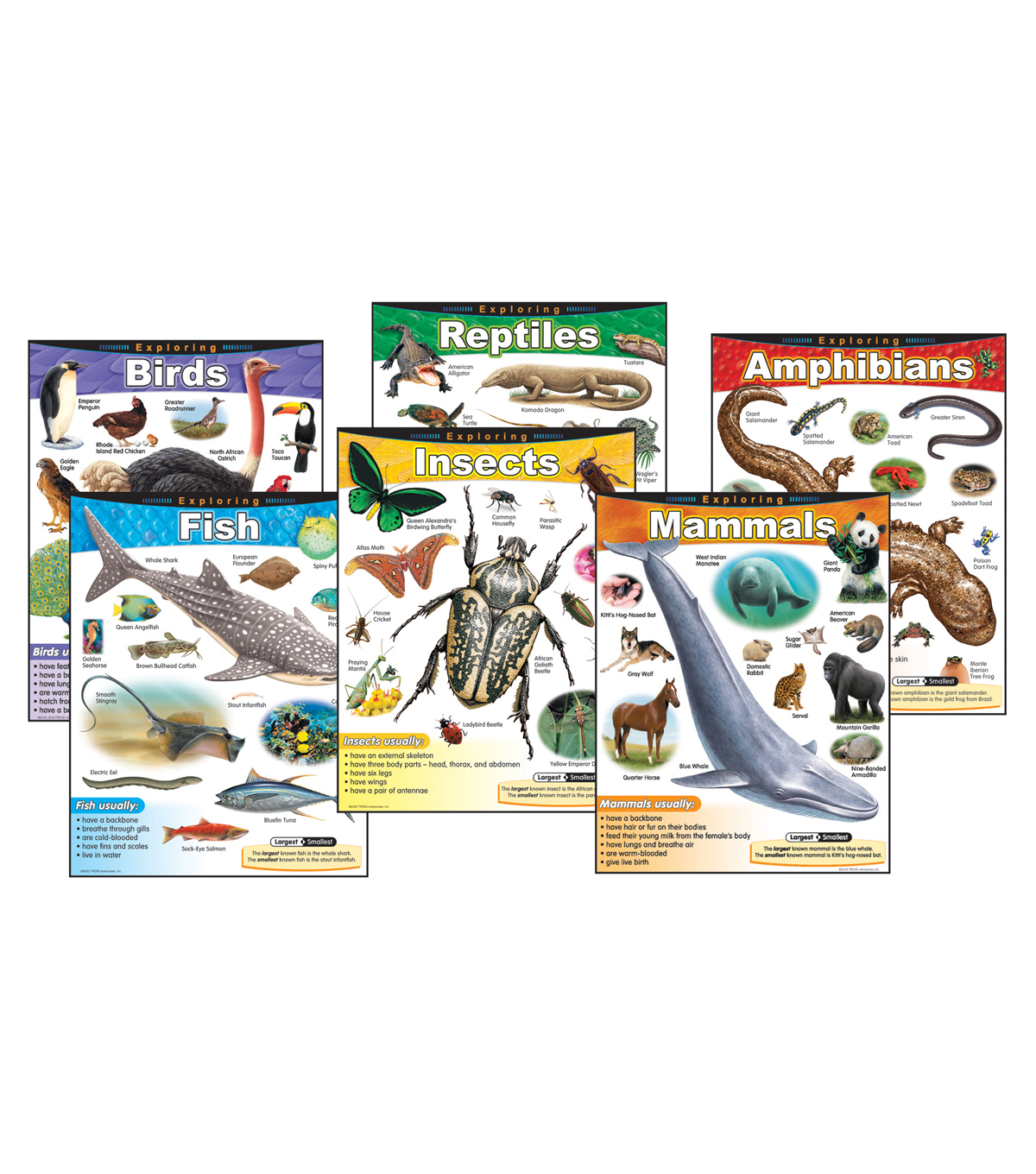 Exploring... Series Learning Charts Combo Pack Set of 6