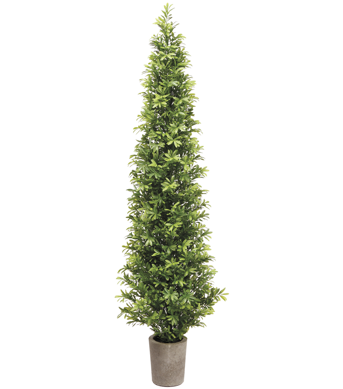 Podocarpus Topiary Tree in Cement Pot 35\u0027\u0027