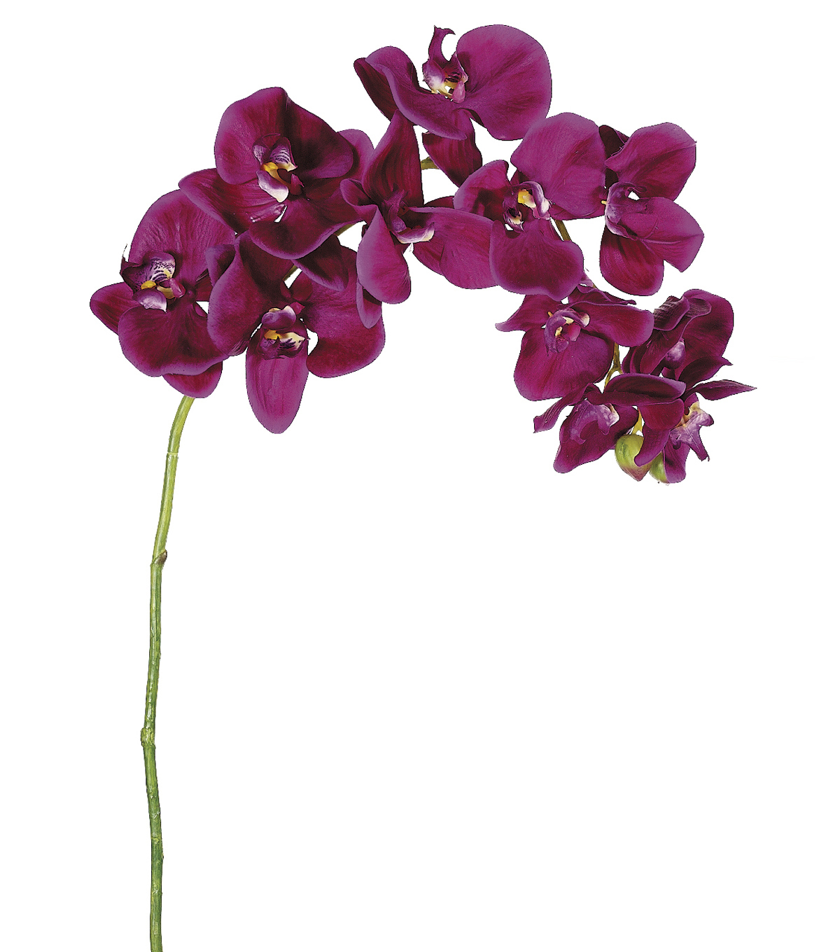 Bloom Room 37\u0022 Phalaenopsis Stem-Violet