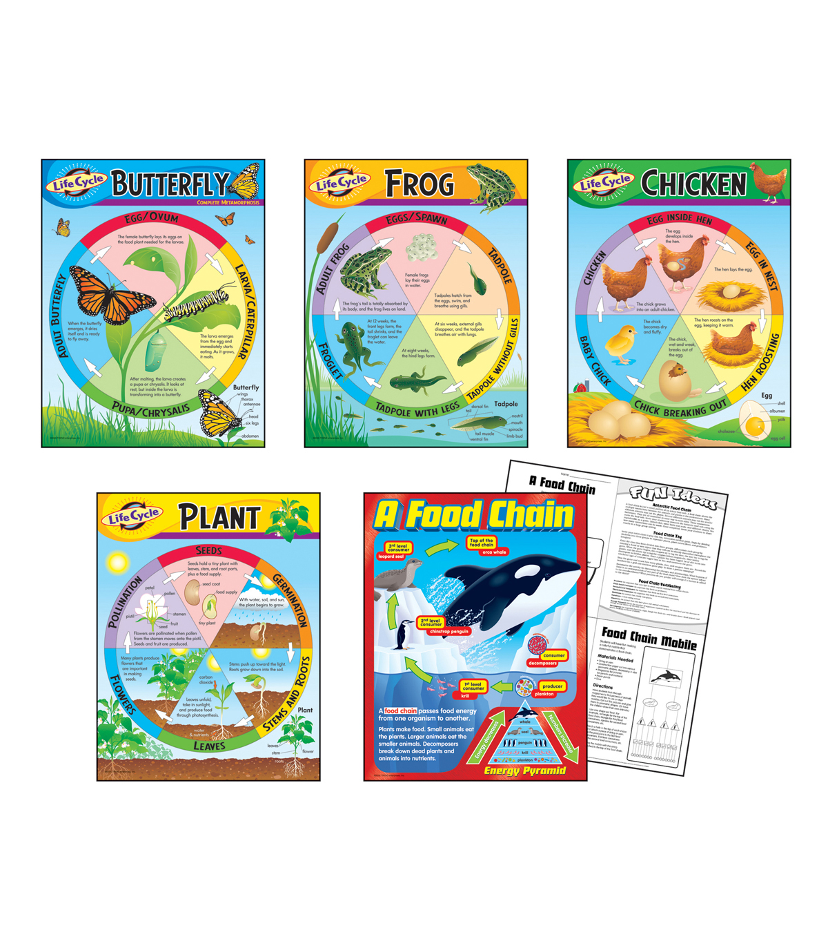 Life Cycles Learning Charts Combo Pack Set of 5