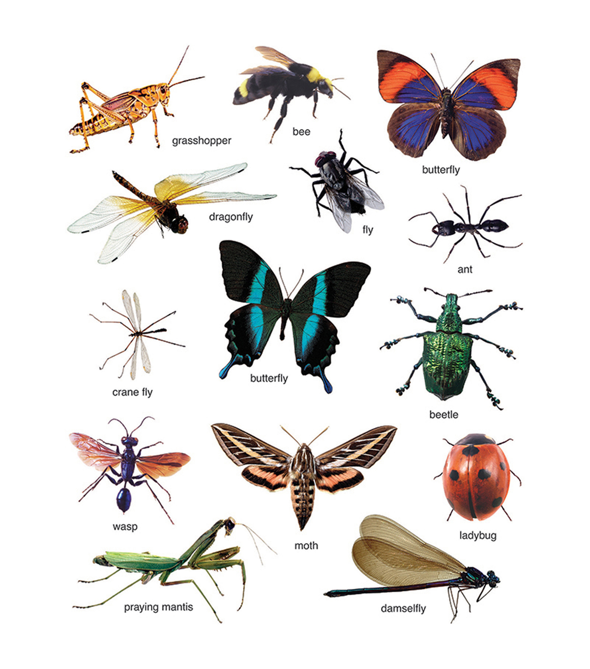 Carson Dellosa Insects Photographic Stickers 12 Packs
