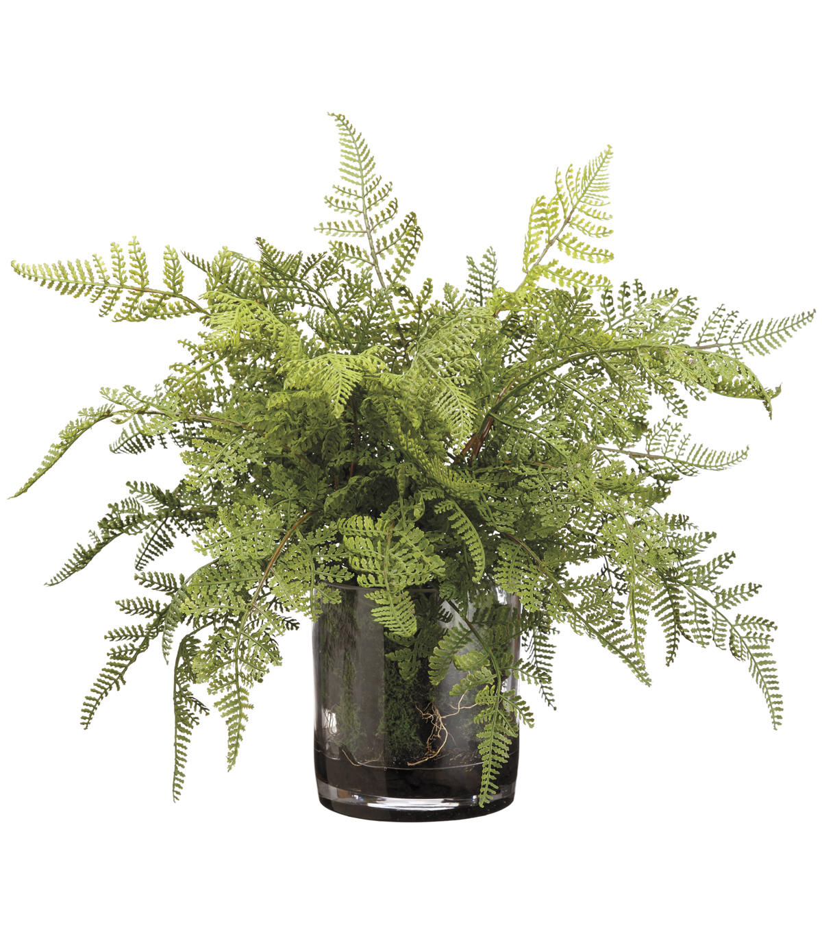 Lace Fern & Organic Soft Soil in Glass Vase 17\u0027\u0027-Green