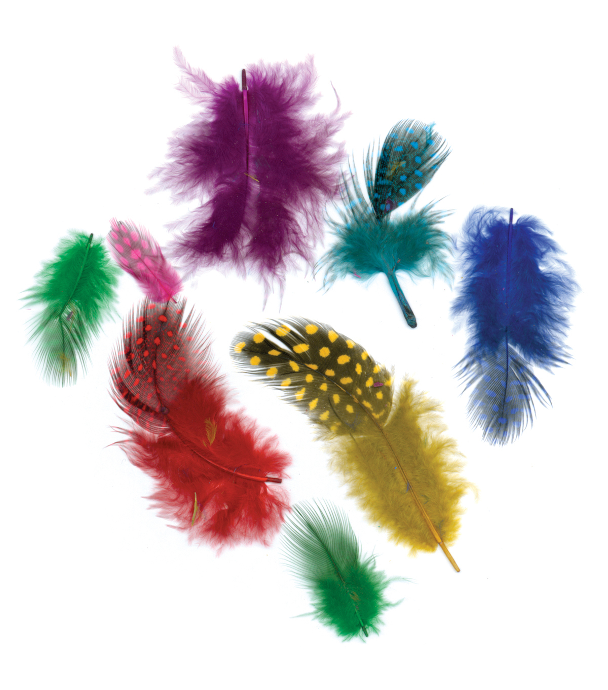 Zucker Guinea Plumage Feathers-Assorted