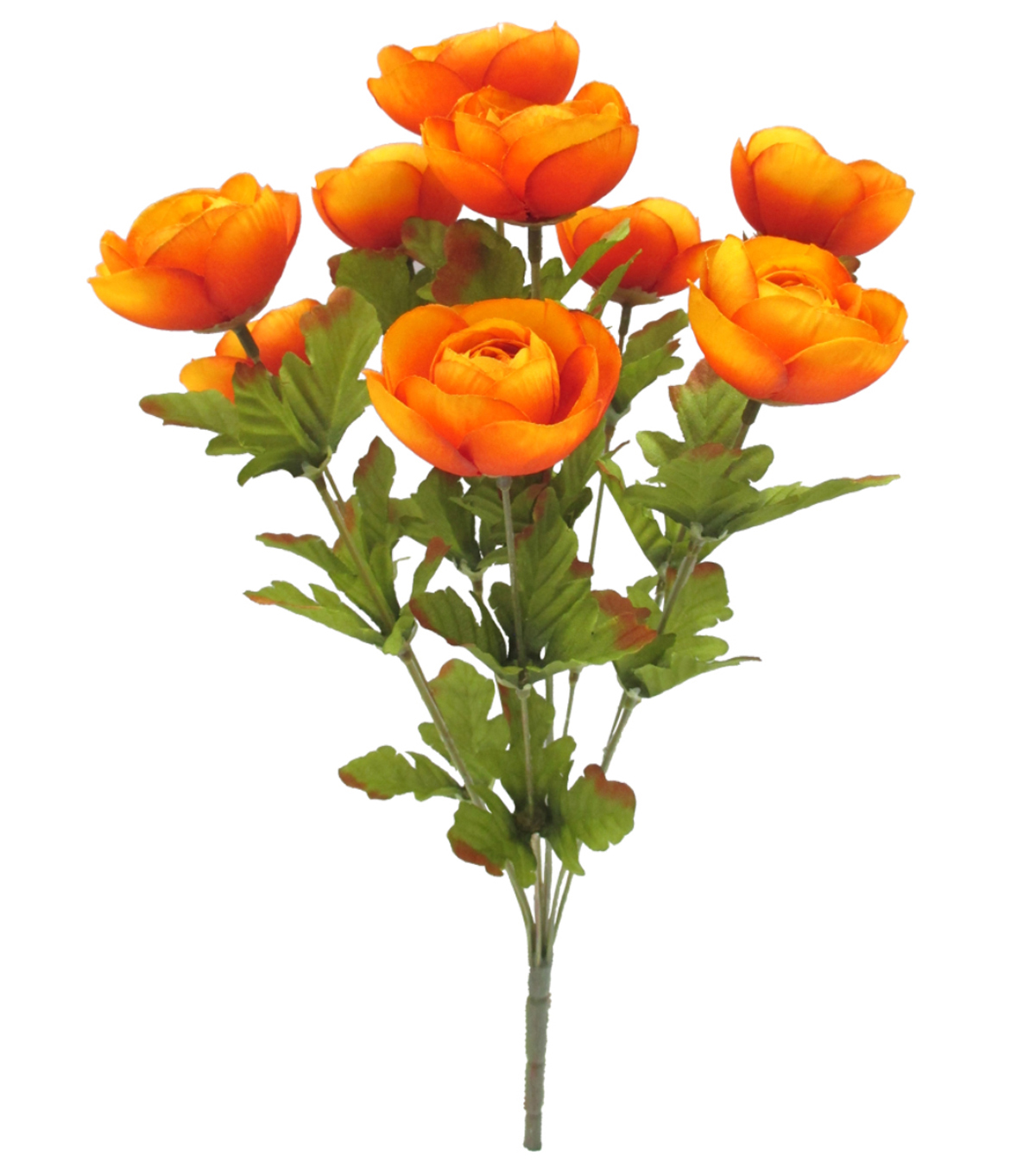 Blooming Autumn 18\u0027\u0027 Ranunculus Bush-Orange