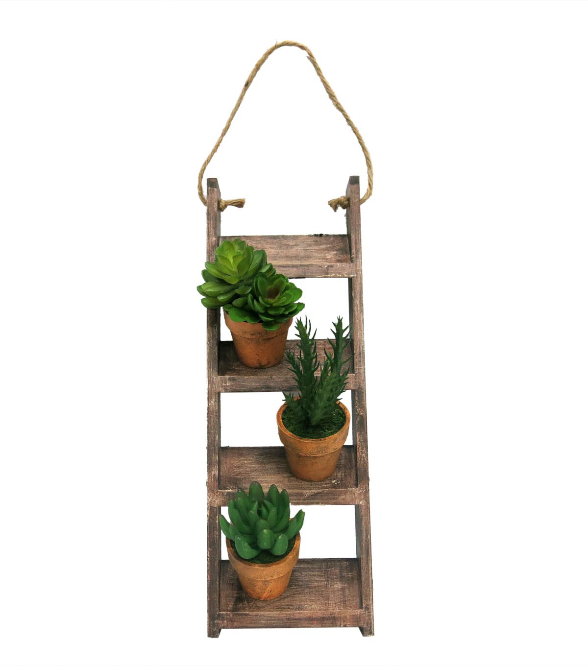 Bloom Room 16\u0027\u0027 Shelf Wall Decor with Potted Succulents