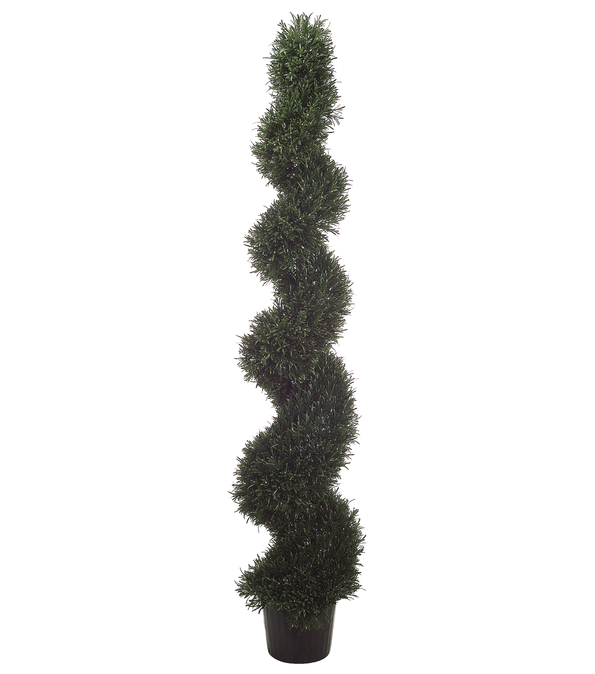 Spiral Rosemary Topiary in Plastic Pot 6\u0027