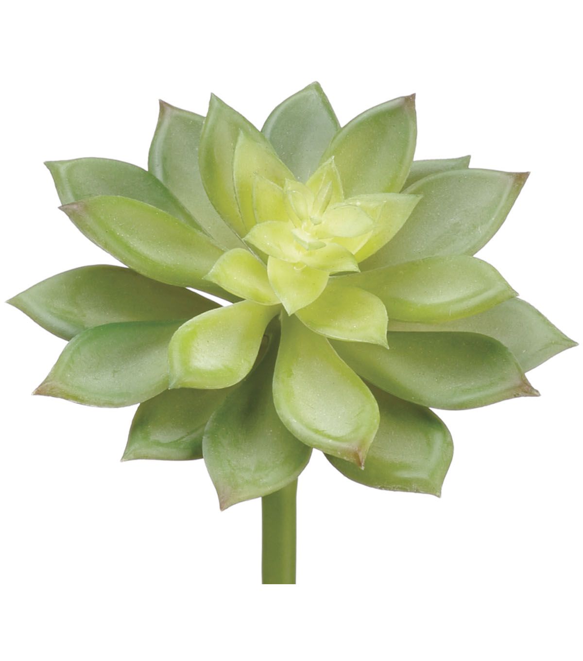 Bloom Room 4\u0027\u0027 Soft Echeveria Pick-Green