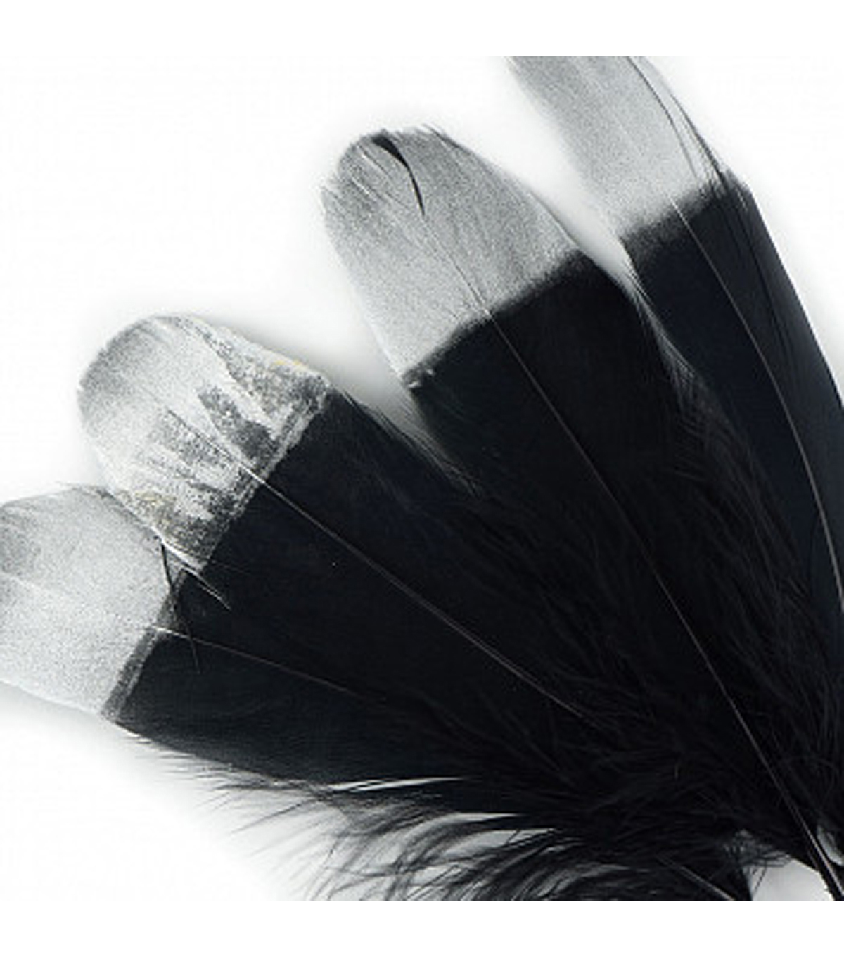 Goose Pallet Feather 4pk-Black with Silver Tips